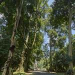 Rental Car from Jakarta to Bogor Botanical Gardens